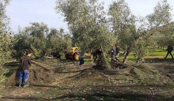 el-sector-agrario-pide-apoyo-ayuntamientos-rechazar-nueva-pac