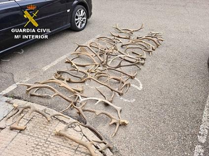 denunciadas-tres-personas-por-transportar-astas-de-ciervo-gamo-sin-autorizacion