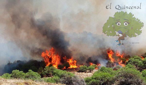 incendio-de-gran-magnitud-en-termino-municipal-de-belalcazar