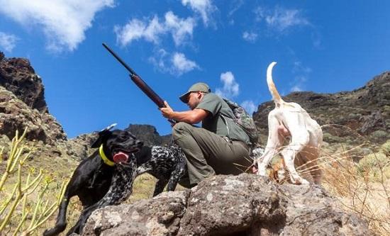 ley-de-bienestar-animal-prohibe-utilizar-perros-podria-ser-letal-caza