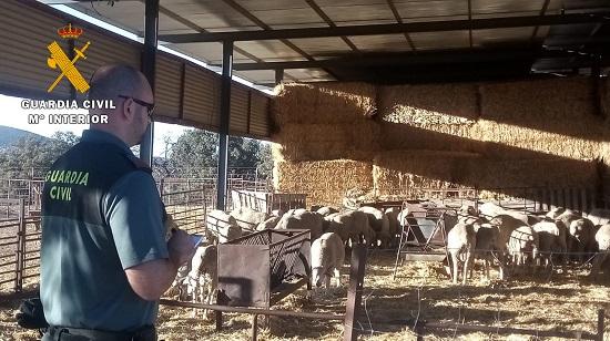 tres-detenidos-robo-de-ganado-ovino-encontraba-trashumancia-cordoba