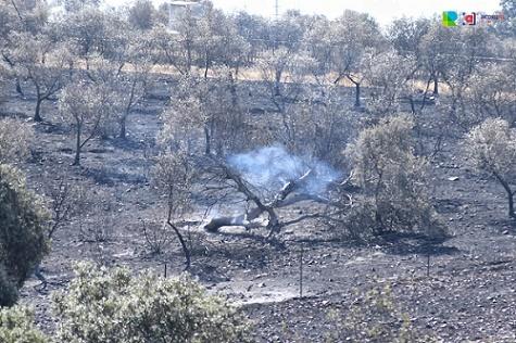 el-gobierno-declarara-zonas-gravemente-afectadas-aquellas-que-hayan-sufrido-incendios
